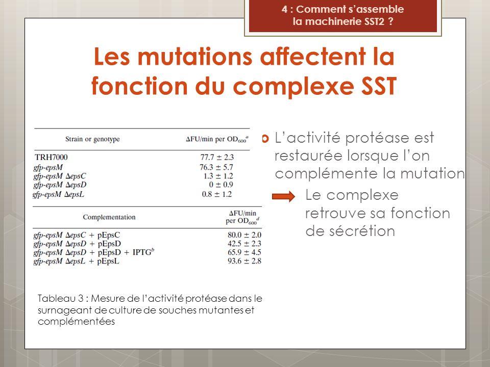 Les mutations affectent la fonction du complexe SST Lactivité protéase est restaurée lorsque lon complémente la mutation Le complexe retrouve sa fonct
