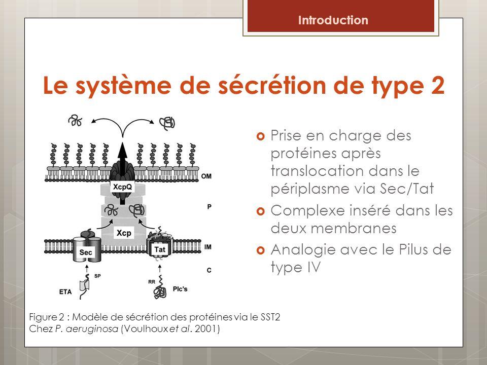 Le système de sécrétion de type 2 Prise en charge des protéines après translocation dans le périplasme via Sec/Tat Complexe inséré dans les deux membr