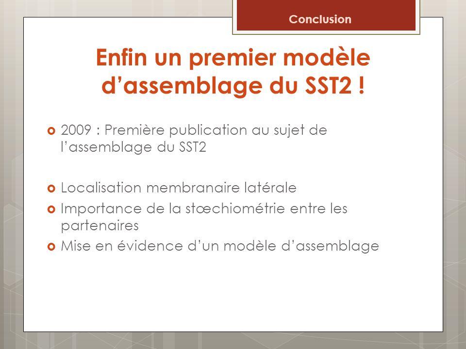 Enfin un premier modèle dassemblage du SST2 ! 2009 : Première publication au sujet de lassemblage du SST2 Localisation membranaire latérale Importance