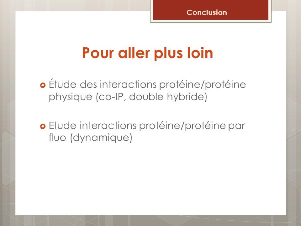 Pour aller plus loin Étude des interactions protéine/protéine physique (co-IP, double hybride) Etude interactions protéine/protéine par fluo (dynamiqu