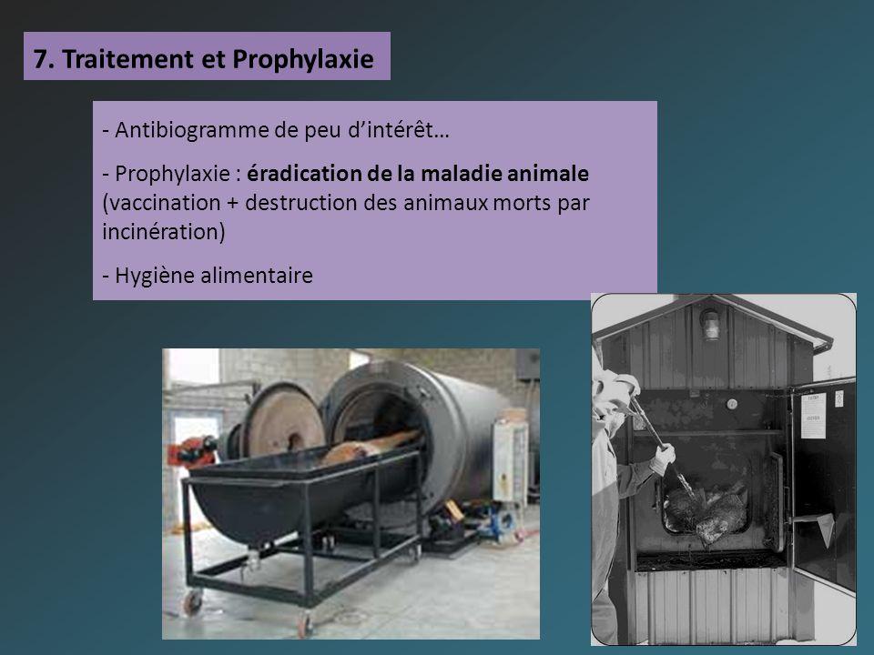 7. Traitement et Prophylaxie - Antibiogramme de peu dintérêt… - Prophylaxie : éradication de la maladie animale (vaccination + destruction des animaux