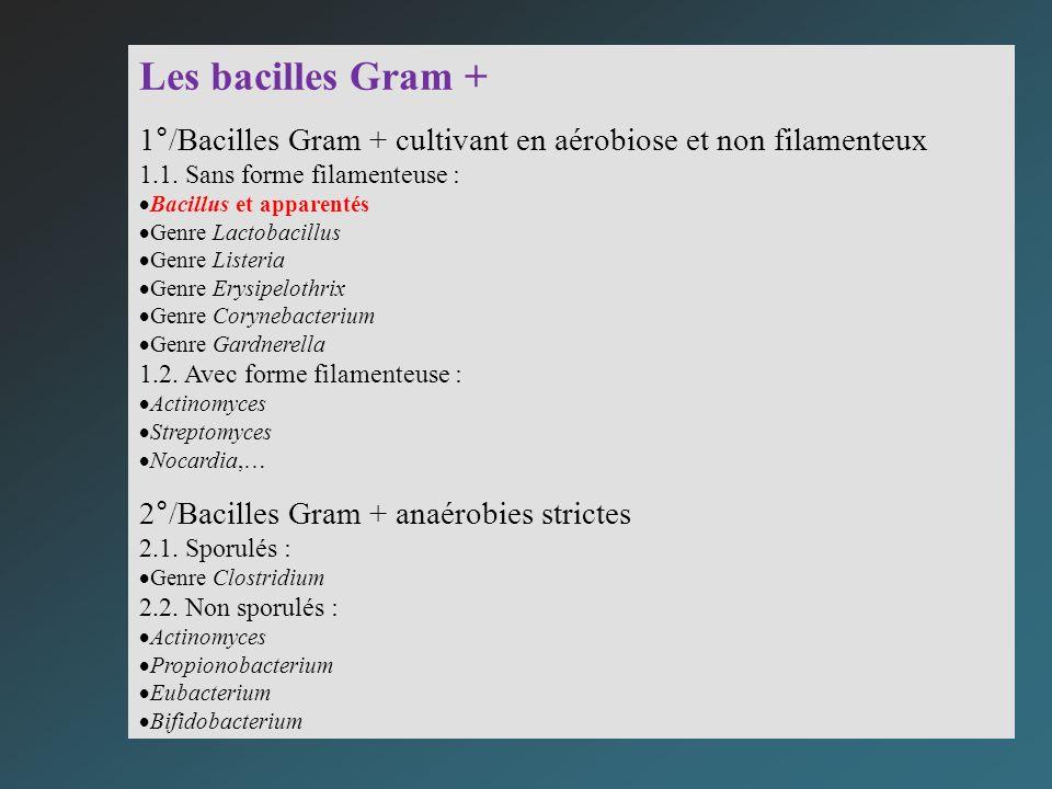 Les bacilles Gram + 1°/Bacilles Gram + cultivant en aérobiose et non filamenteux 1.1. Sans forme filamenteuse : Bacillus et apparentés Genre Lactobaci