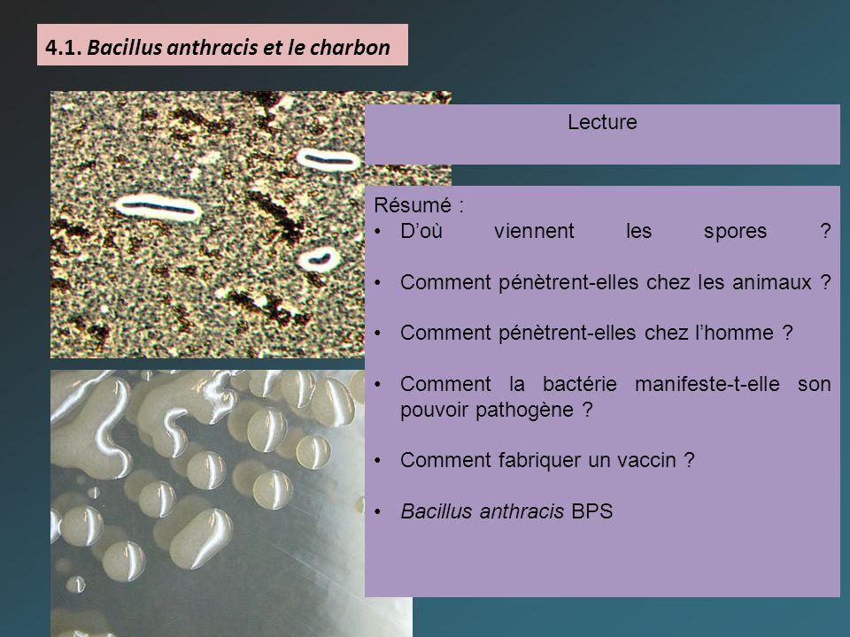 4.1. Bacillus anthracis et le charbon Lecture Résumé : Doù viennent les spores ? Comment pénètrent-elles chez les animaux ? Comment pénètrent-elles ch