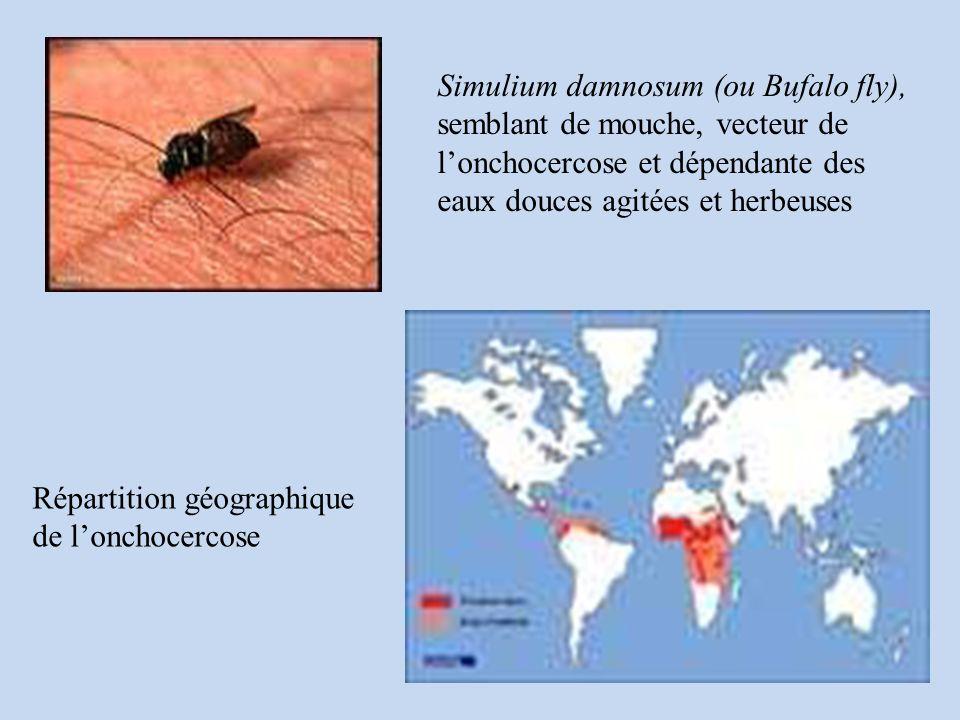 Répartition géographique de lonchocercose Simulium damnosum (ou Bufalo fly), semblant de mouche, vecteur de lonchocercose et dépendante des eaux douces agitées et herbeuses