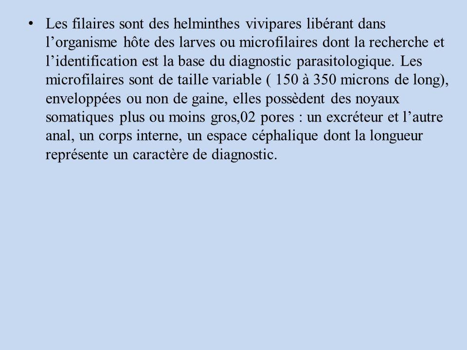Les filaires sont des helminthes vivipares libérant dans lorganisme hôte des larves ou microfilaires dont la recherche et lidentification est la base du diagnostic parasitologique.