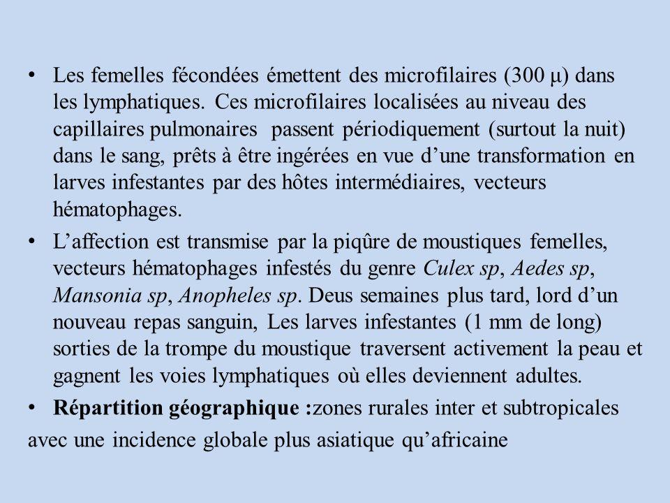 Les femelles fécondées émettent des microfilaires (300 μ) dans les lymphatiques.