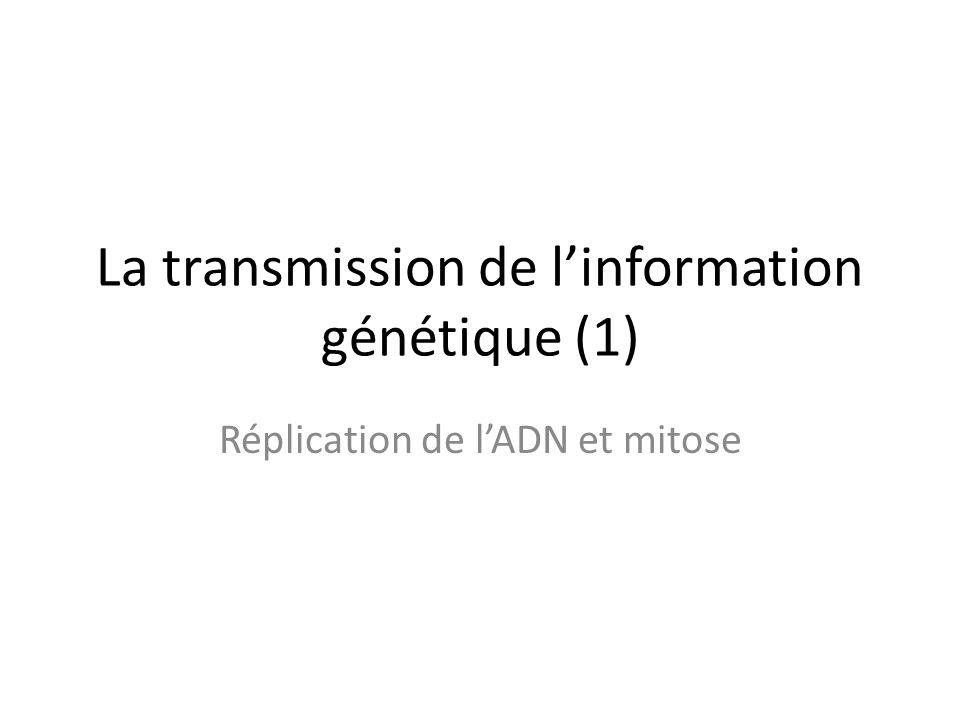 La transmission de linformation génétique (1) Réplication de lADN et mitose