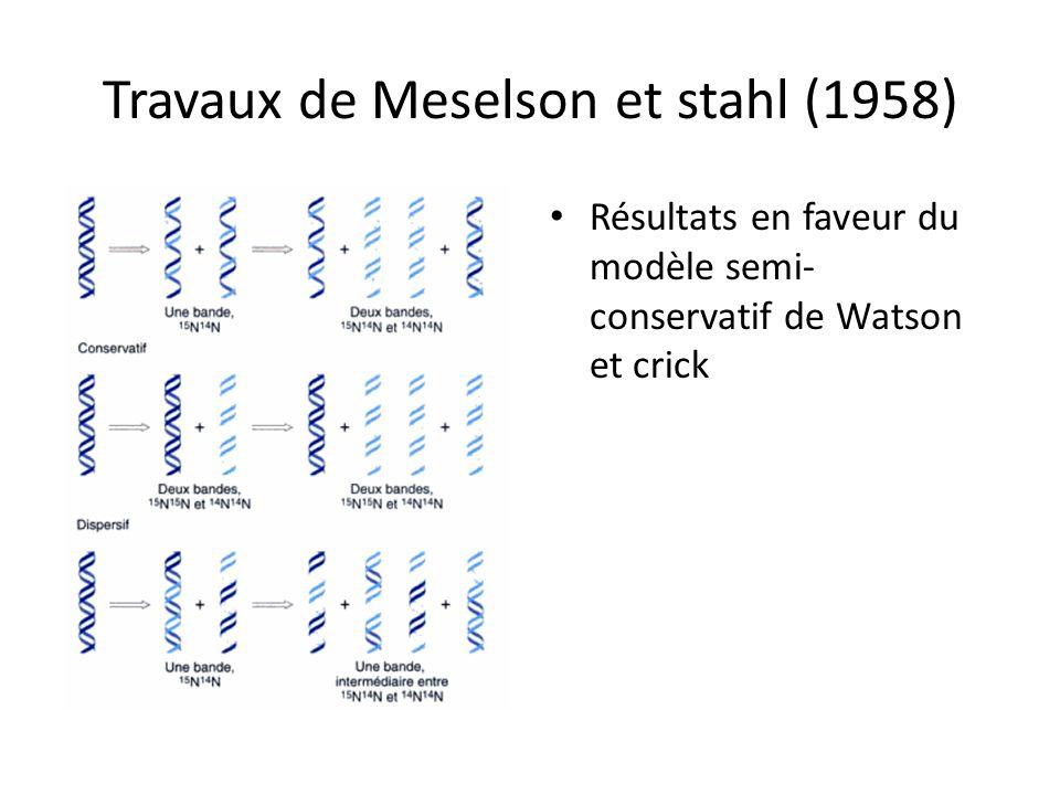 Travaux de Meselson et stahl (1958) Résultats en faveur du modèle semi- conservatif de Watson et crick