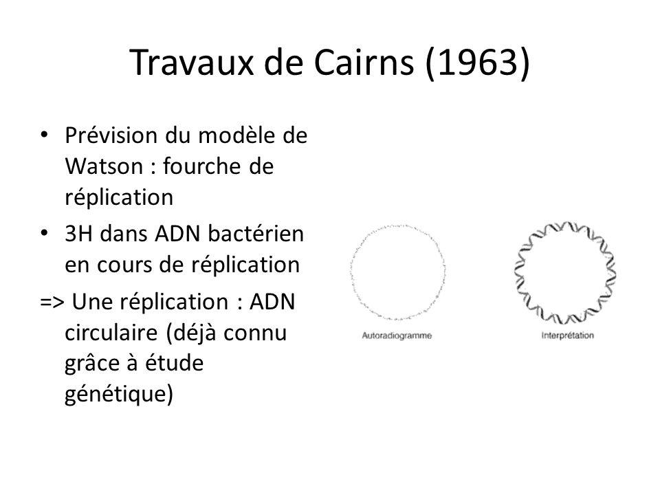 Travaux de Cairns (1963) Prévision du modèle de Watson : fourche de réplication 3H dans ADN bactérien en cours de réplication => Une réplication : ADN