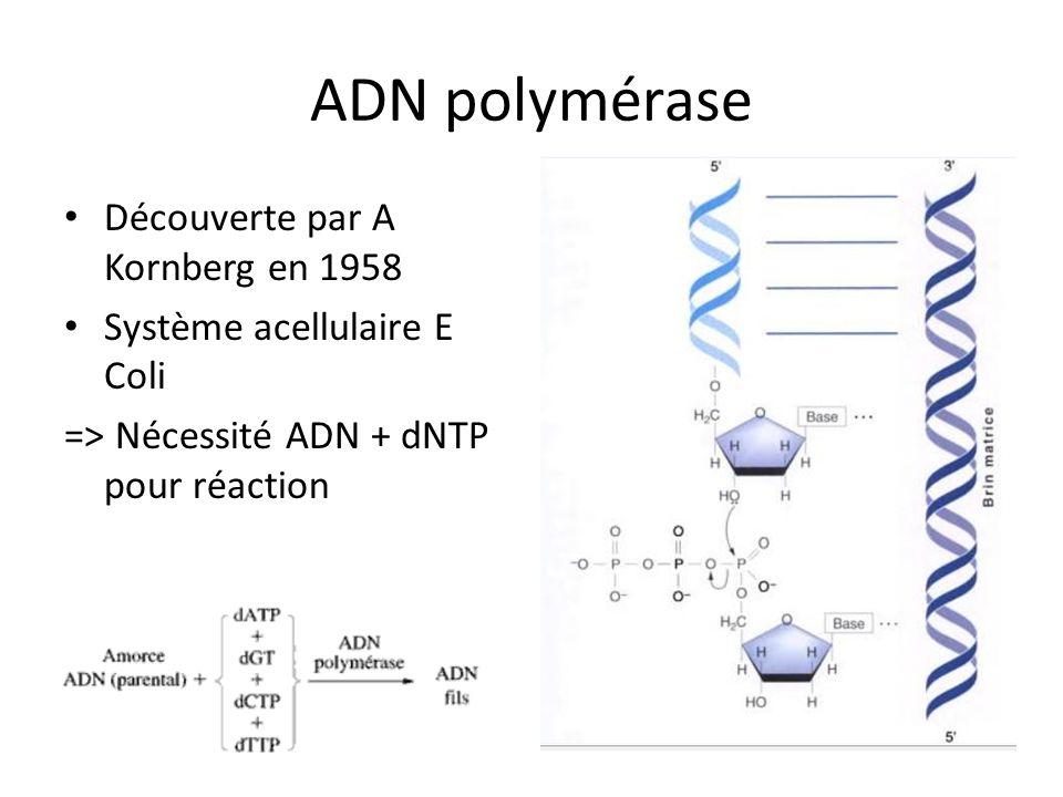 ADN polymérase Découverte par A Kornberg en 1958 Système acellulaire E Coli => Nécessité ADN + dNTP pour réaction