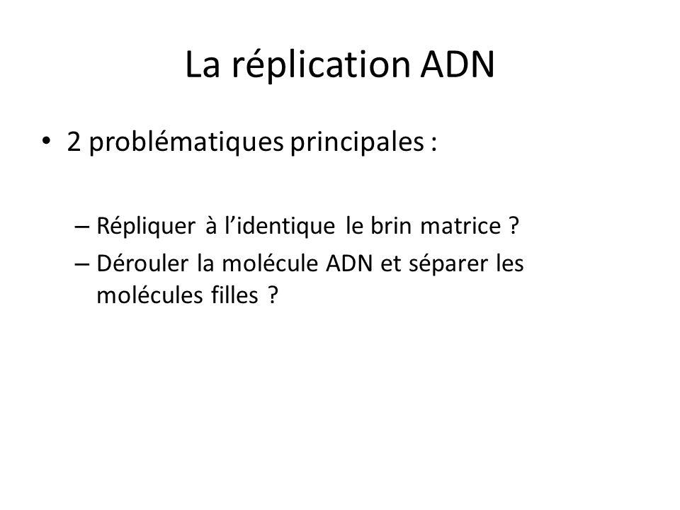 La réplication ADN 2 problématiques principales : – Répliquer à lidentique le brin matrice ? – Dérouler la molécule ADN et séparer les molécules fille