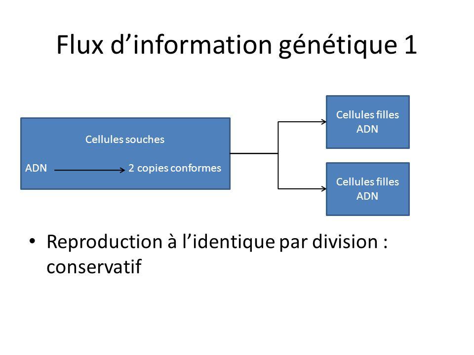 Flux dinformation génétique 1 Reproduction à lidentique par division : conservatif Cellules souches ADN 2 copies conformes Cellules filles ADN Cellule