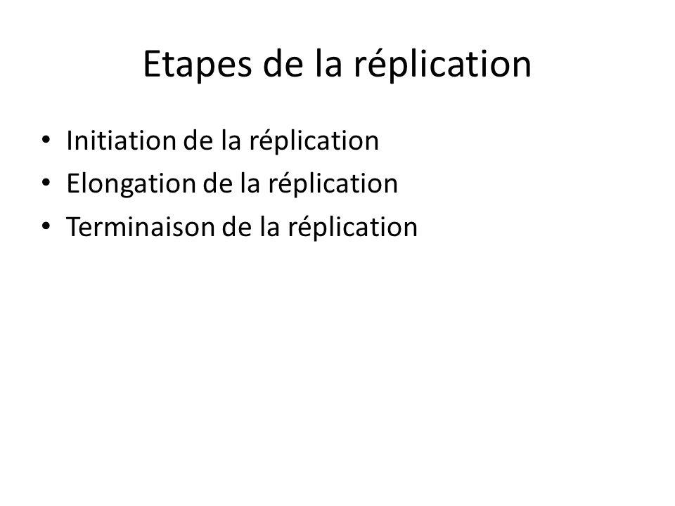 Etapes de la réplication Initiation de la réplication Elongation de la réplication Terminaison de la réplication