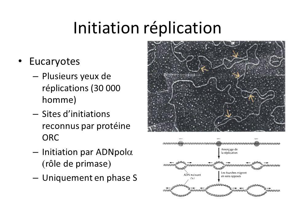 Initiation réplication Eucaryotes – Plusieurs yeux de réplications (30 000 homme) – Sites dinitiations reconnus par protéine ORC – Initiation par ADNp
