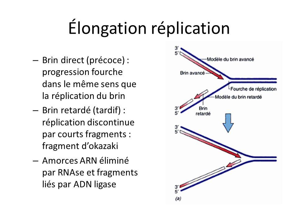 Élongation réplication – Brin direct (précoce) : progression fourche dans le même sens que la réplication du brin – Brin retardé (tardif) : réplicatio