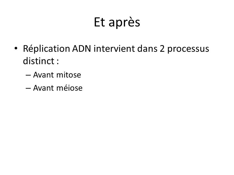 Et après Réplication ADN intervient dans 2 processus distinct : – Avant mitose – Avant méiose