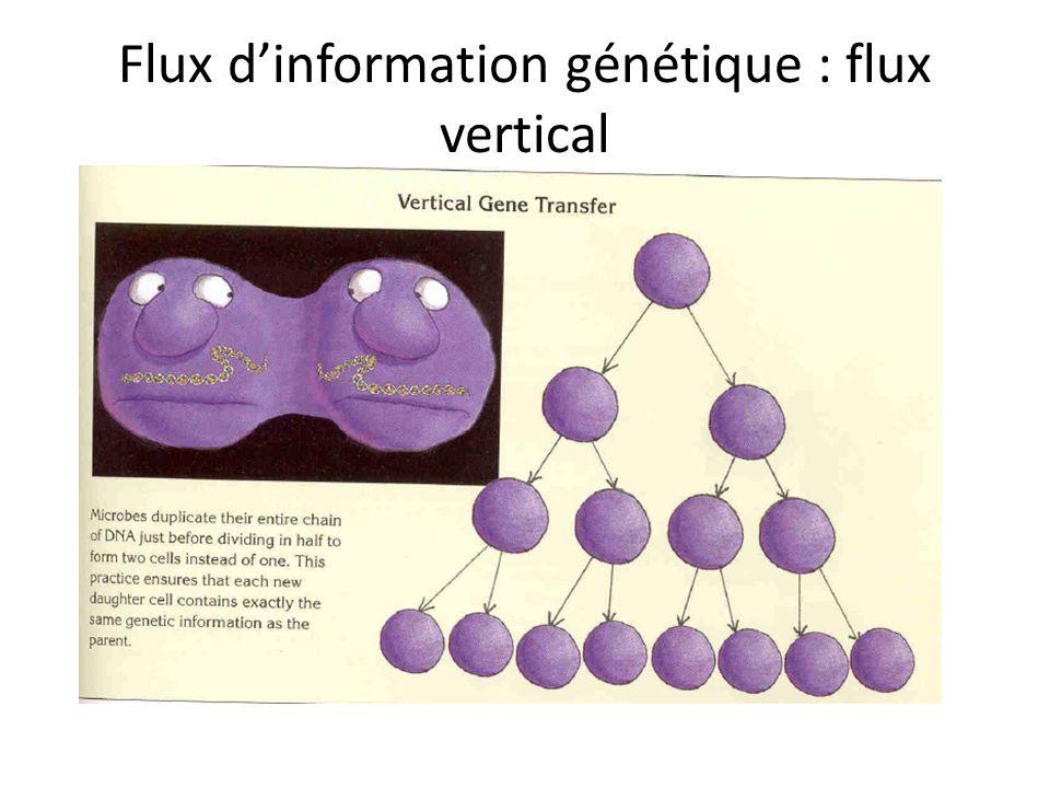Flux dinformation génétique : flux vertical