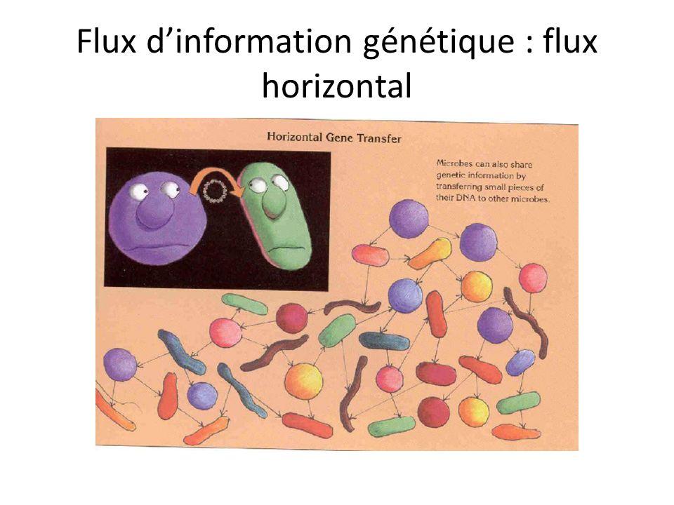 Flux dinformation génétique : flux horizontal