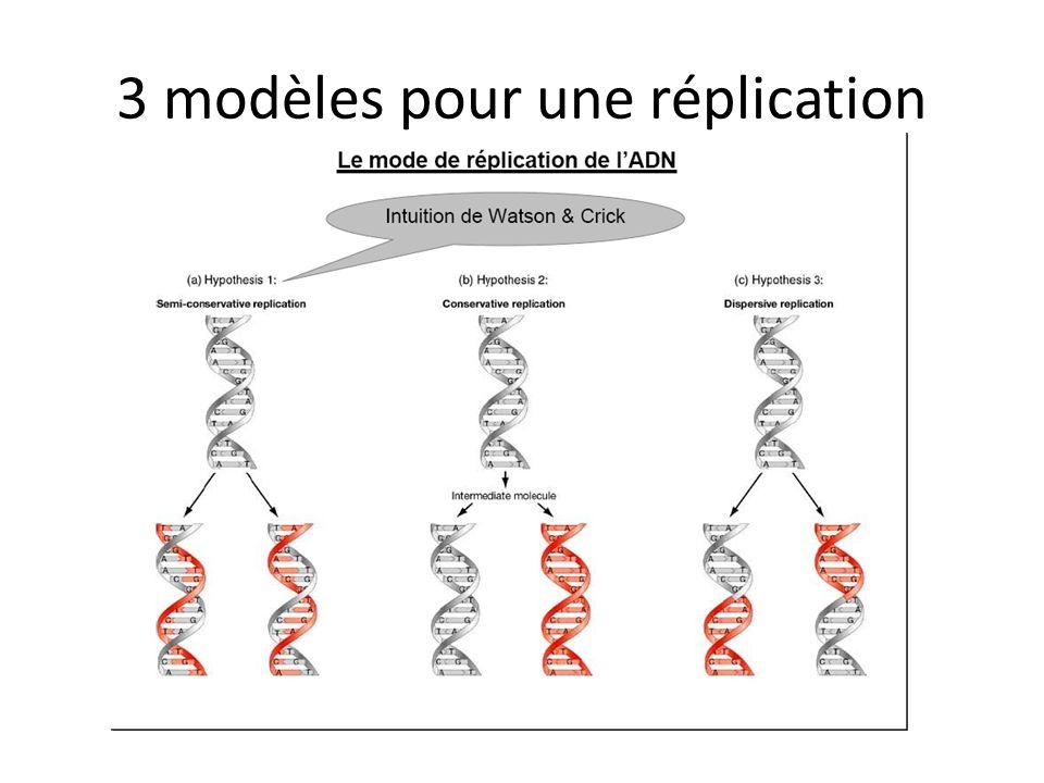 caryotype Traitement à la colchicine qui bloque la mitose en métaphase Classement par ordre taille et forme Autosome/gonosome