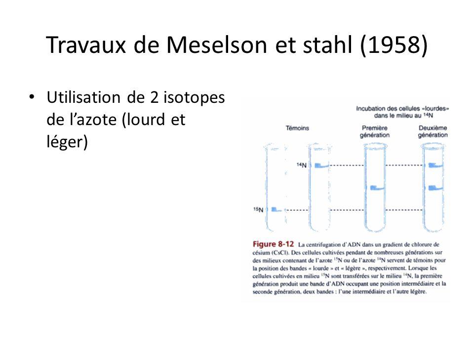 Travaux de Meselson et stahl (1958) Utilisation de 2 isotopes de lazote (lourd et léger)
