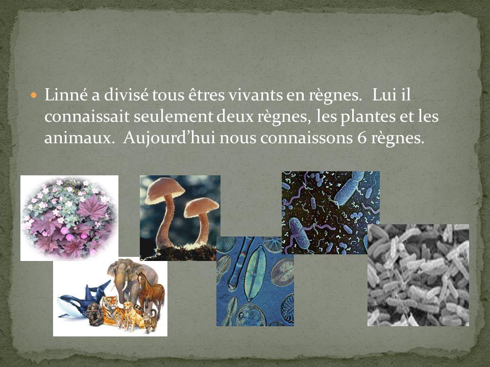 Linné a divisé tous êtres vivants en règnes. Lui il connaissait seulement deux règnes, les plantes et les animaux. Aujourdhui nous connaissons 6 règne