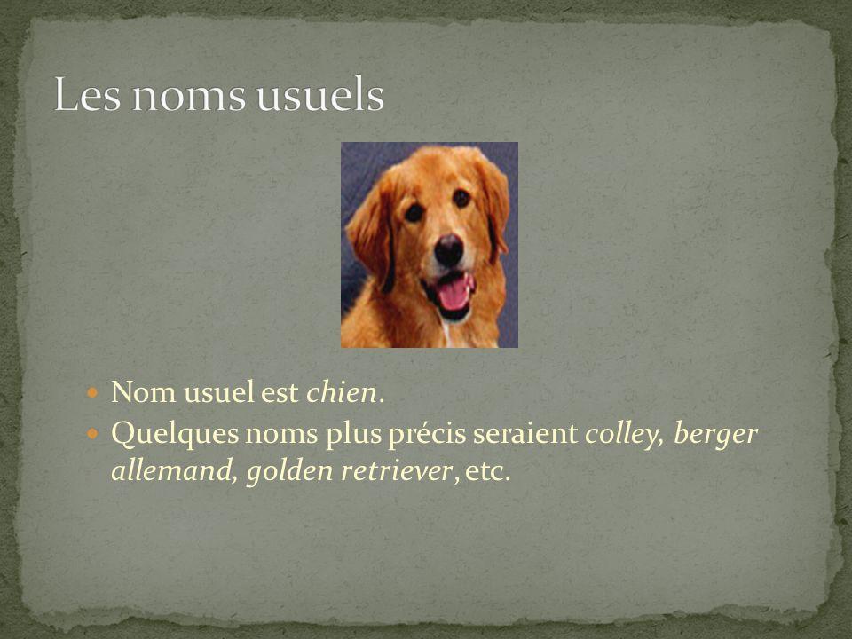 Nom usuel est chien. Quelques noms plus précis seraient colley, berger allemand, golden retriever, etc.