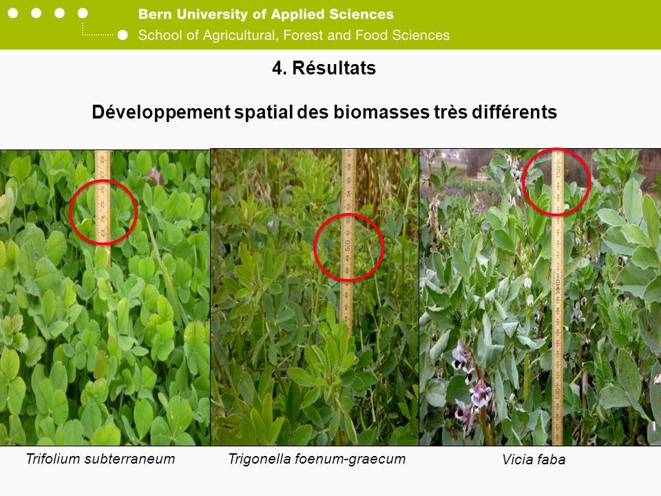 4. Résultats Développement spatial des biomasses très différents Vicia faba Trifolium subterraneumTrigonella foenum-graecum