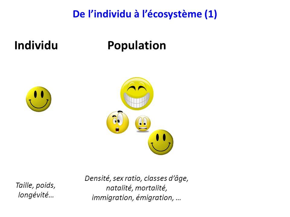 De lindividu à lécosystème (1) IndividuPopulationCommunauté Taille, poids, longévité… Densité, sex ratio, classes dâge, natalité, mortalité, immigrati