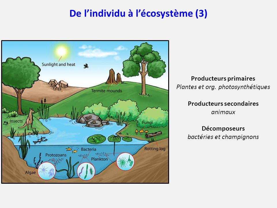 De lindividu à lécosystème (3) Producteurs primaires Plantes et org. photosynthétiques Producteurs secondaires animaux Décomposeurs bactéries et champ