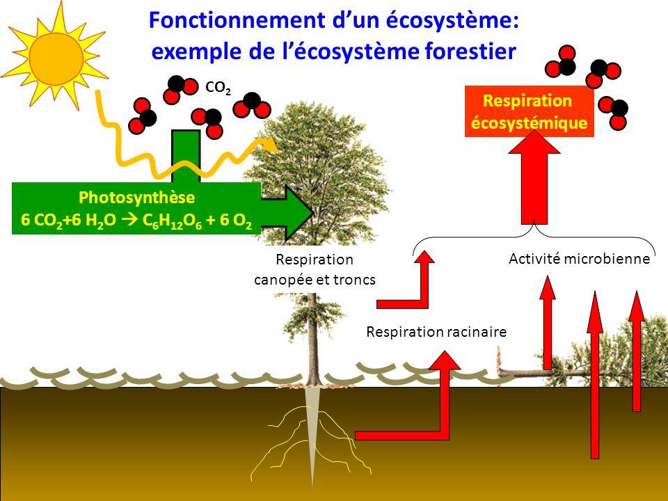 Activité microbienne Fonctionnement dun écosystème: exemple de lécosystème forestier CO 2 Photosynthèse 6 CO 2 +6 H 2 O C 6 H 12 O 6 + 6 O 2 Respirati