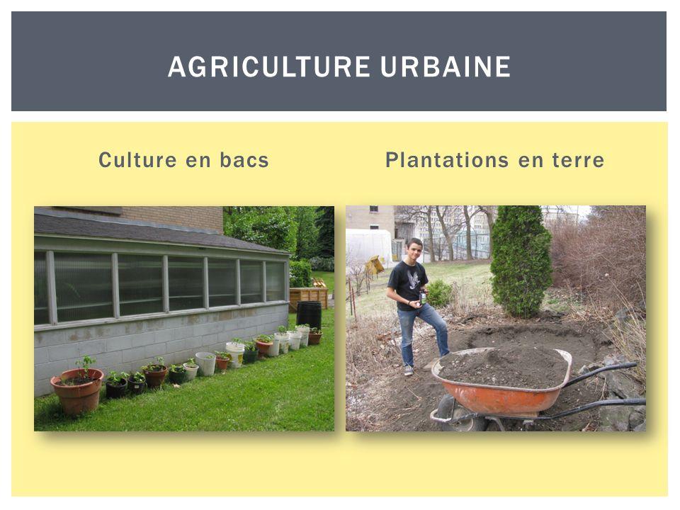 Culture en bacsPlantations en terre AGRICULTURE URBAINE