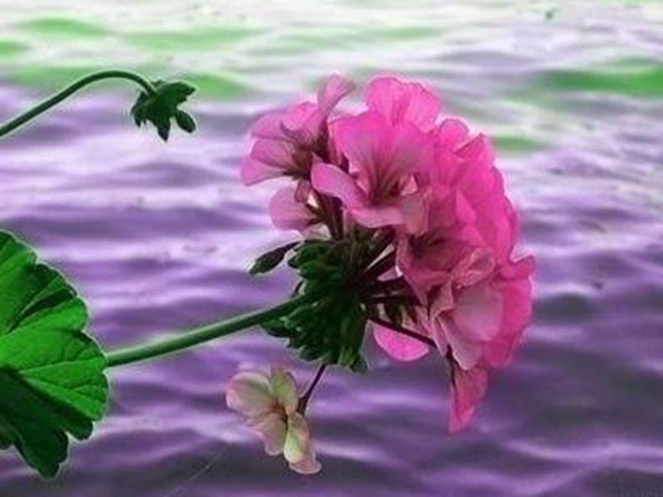 Le sens du devoir sans amour rend irritable, mécontent. La responsabilité sans amour rend inflexible, sans égard envers autrui. La justice sans amour