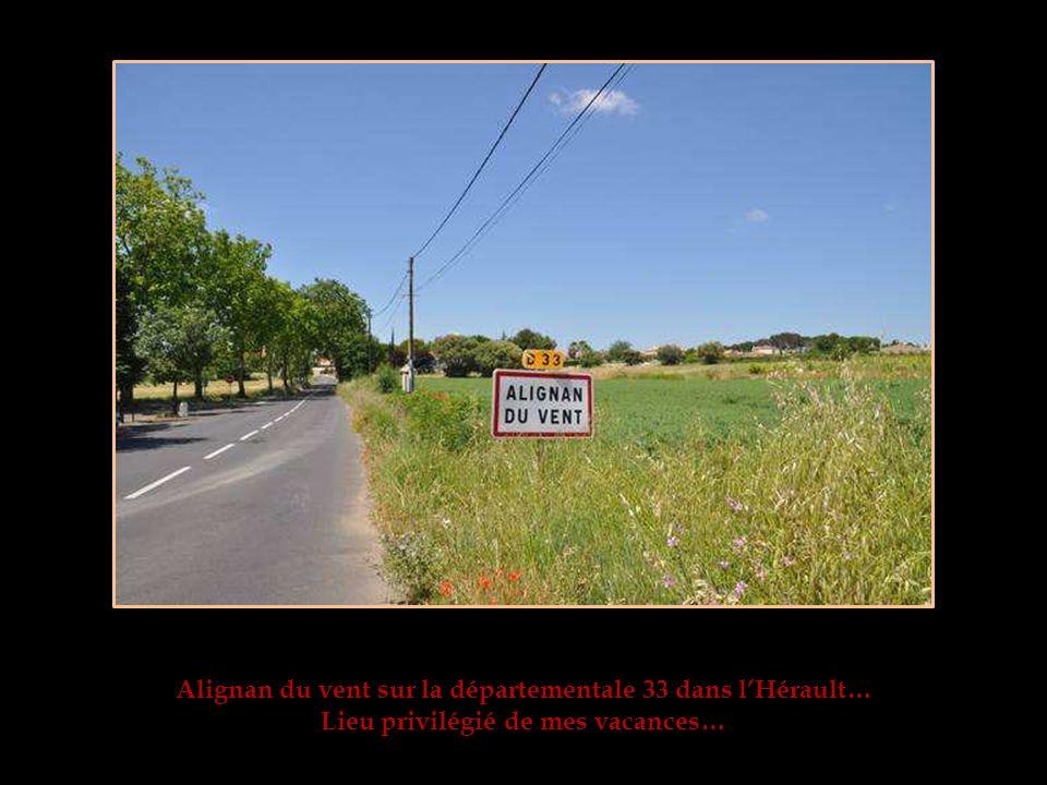 Alignan du vent sur la départementale 33 dans lHérault… Lieu privilégié de mes vacances…