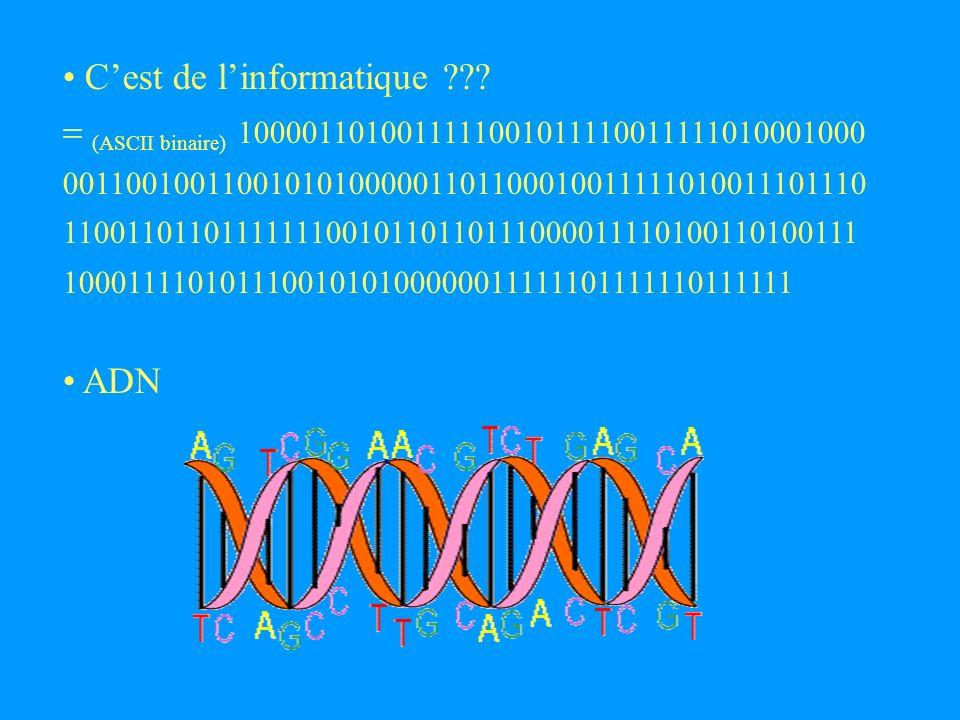 Applications de la combinatoire des mots : - compression de données - biologie : recherche de séquences - systèmes distribués, calcul parallèle - compilateurs