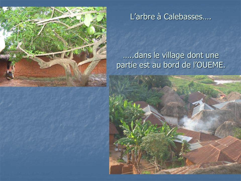 Larbre à Calebasses…. …..dans le village dont une partie est au bord de lOUEME.