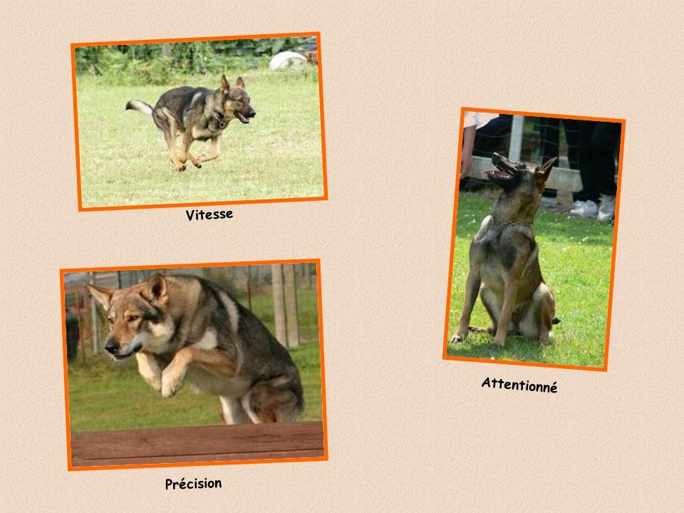 Les concours d OBÉISSANCE sont réservés aux chiens de toutes races reconnues par la Société Centrale Canine. Ces épreuves sont aussi ouvertes aux chie