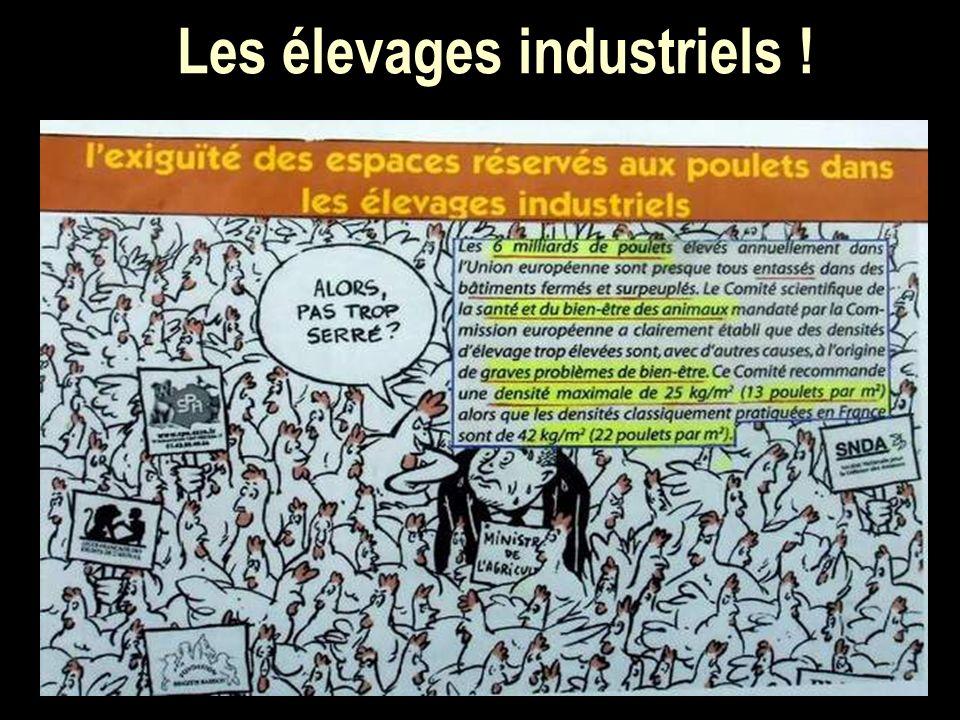 Les élevages industriels !