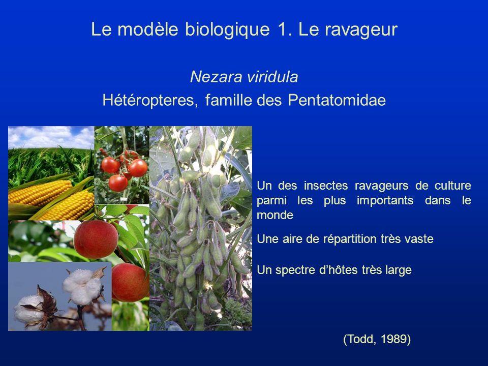 Trissolcus basalis Hyménoptère, famille des Scelionidae Avantages : - Haute spécificité avec N.