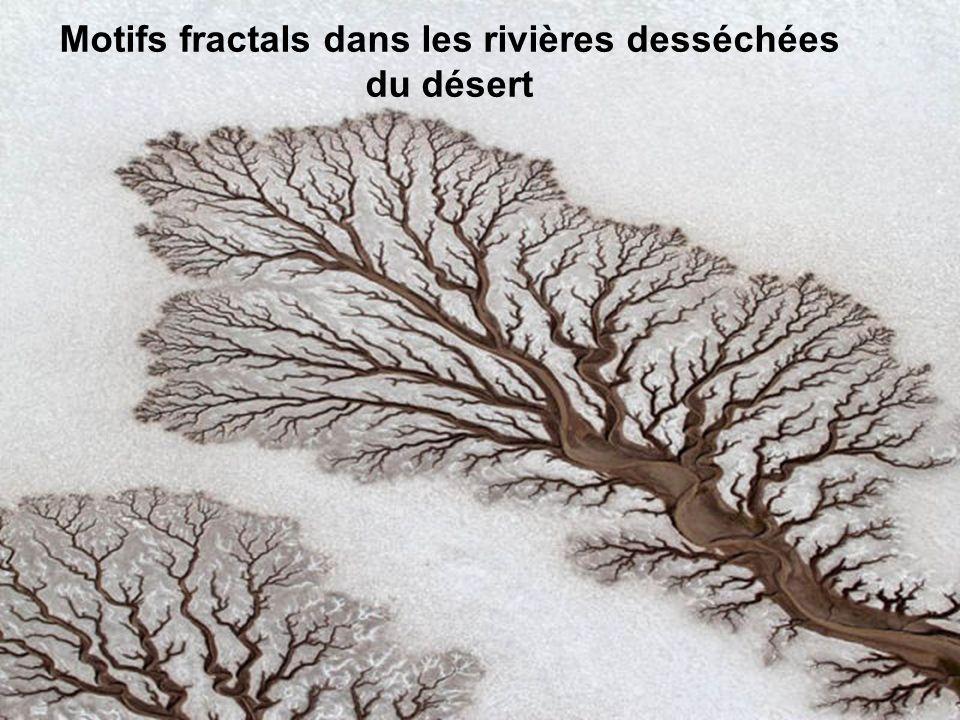 Motifs fractals dans les rivières desséchées du désert