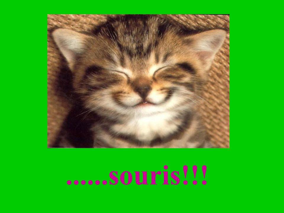 ......souris!!!