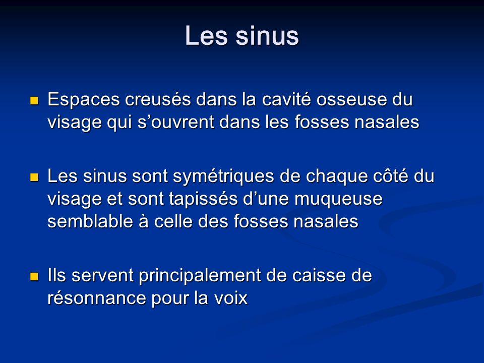 Les sinus Les sinus Espaces creusés dans la cavité osseuse du visage qui souvrent dans les fosses nasales Espaces creusés dans la cavité osseuse du vi
