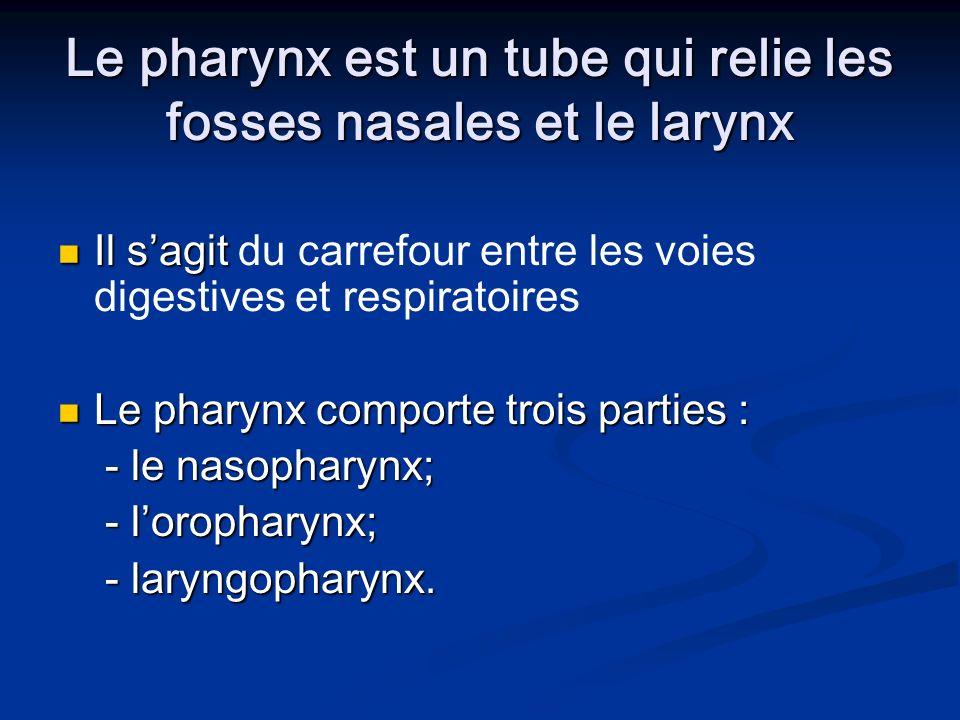 Le pharynx est un tube qui relie les fosses nasales et le larynx Il sagit Il sagit du carrefour entre les voies digestives et respiratoires Le pharynx