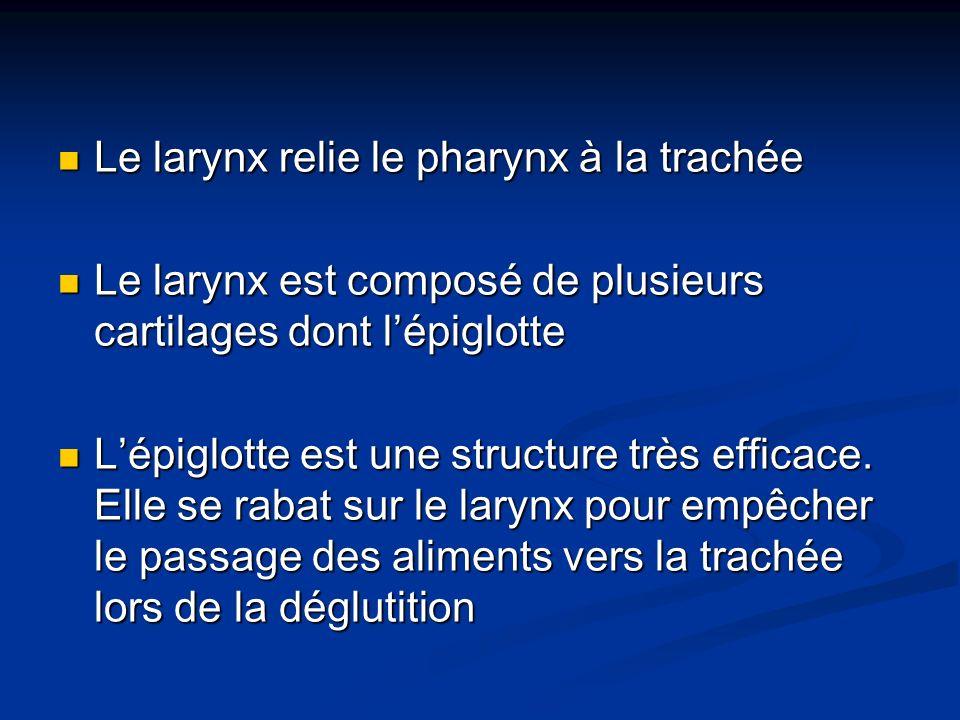 Le larynx relie le pharynx à la trachée Le larynx relie le pharynx à la trachée Le larynx est composé de plusieurs cartilages dont lépiglotte Le laryn