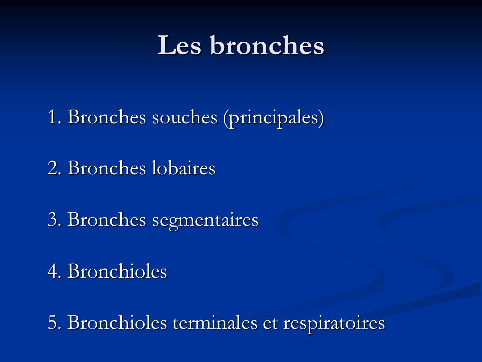 Les bronches 1. Bronches souches (principales) 2. Bronches lobaires 3. Bronches segmentaires 4. Bronchioles 5. Bronchioles terminales et respiratoires