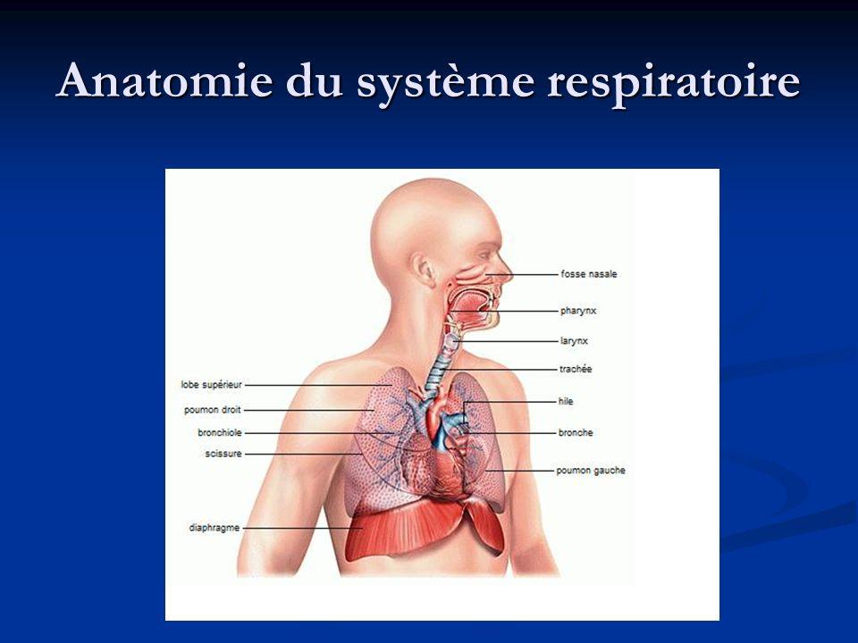 Anatomie du système respiratoire