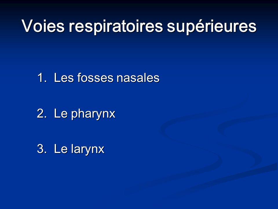 Voies respiratoires supérieures 1. Les fosses nasales 2. Le pharynx 3. Le larynx
