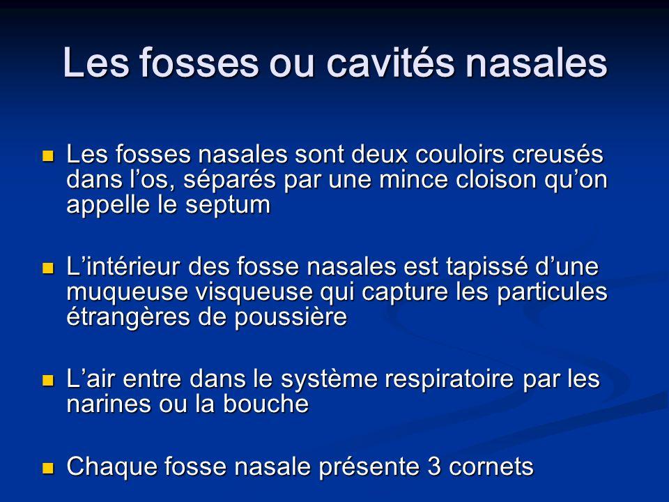 Les fosses ou cavités nasales Les fosses nasales sont deux couloirs creusés dans los, séparés par une mince cloison quon appelle le septum Les fosses