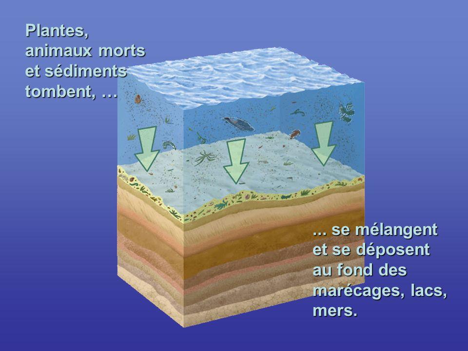 ... se mélangent et se déposent au fond des marécages, lacs, mers.