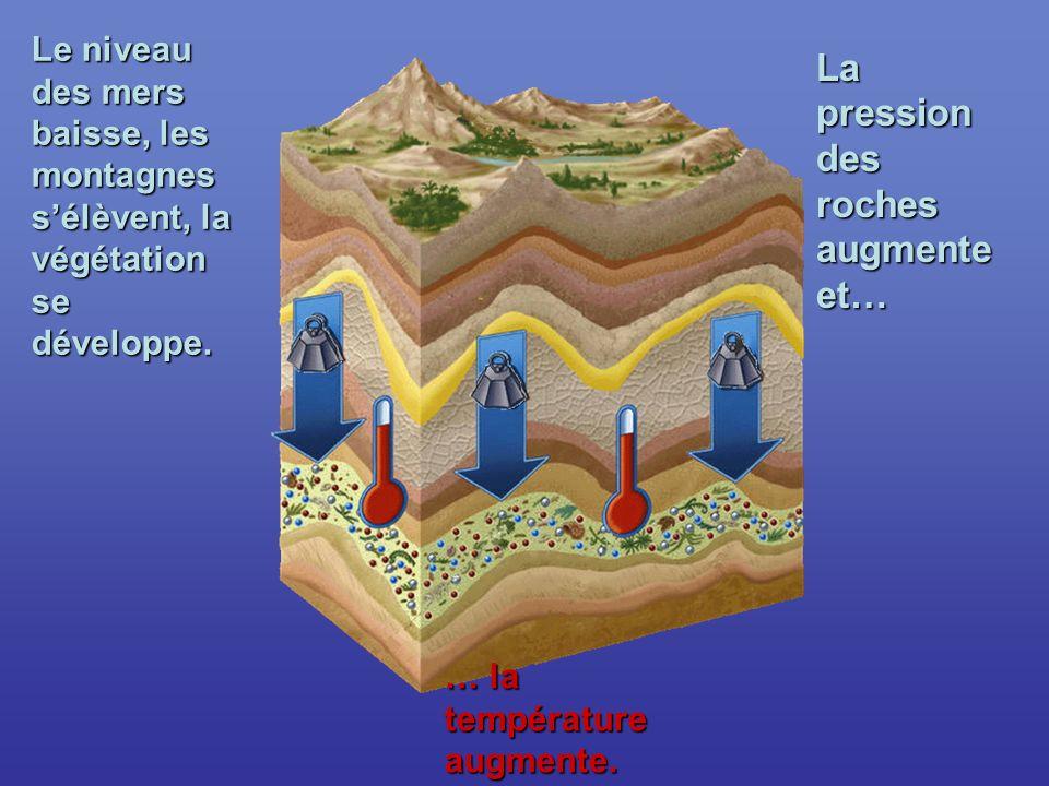 Le niveau des mers baisse, les montagnes sélèvent, la végétation se développe.