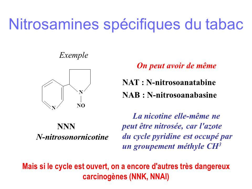 Exemple N NO N NNN N-nitrosonornicotine On peut avoir de même NAT : N-nitrosoanatabine NAB : N-nitrosoanabasine La nicotine elle-même ne peut être nitrosée, car l azote du cycle pyridine est occupé par un groupement méthyle CH 3 Mais si le cycle est ouvert, on a encore d autres très dangereux carcinogènes (NNK, NNAl) Nitrosamines spécifiques du tabac